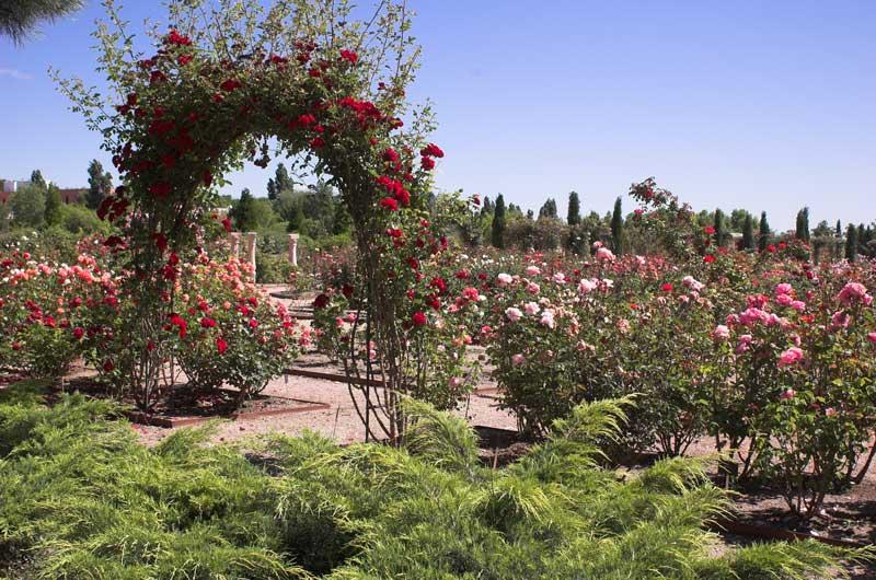 Resultado de imagen de Real Jardín Botánico Juan Carlos I alcala de henares