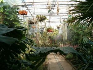 Jardin_Botanico_UAH_invernadero